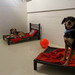 Thumb-petsuites_zionsville-dog-cots