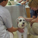 Thumb-petting-a-dog-at-petsuites-zionsville