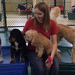 Thumb-zionsville-doggy-day-care