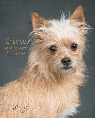 Charlee pom august 2016