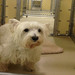 Thumb-petsuites-roswell-boarding-01
