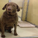 Thumb-petsuites-roswell-boarding-07