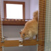 Thumb-medium-petsuites-roswell-boarding-06