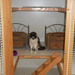 Thumb-medium-petsuites-roswell-experience-10