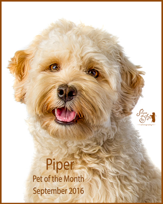 Piper pet of the month 9 16