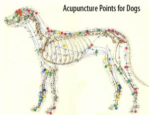 acupuncture points for dogs