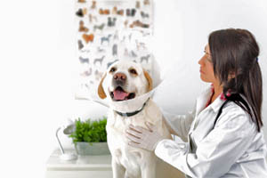 Galveston Veterinary Clinic Anesthetic Safety in your pet at Galveston, TX