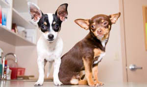 Learn more about veterinary hospital policies at Catalina Pet Hospital Tucson