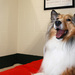 Thumb-petsuites_charlotte-collie