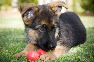 General health care for your pet in Salt Lake City UT