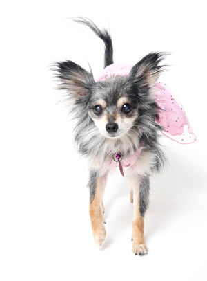 About Critter Care in Plano