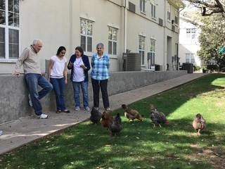 Residents and volunteers feeding chickens at Parsons House Preston Hollow