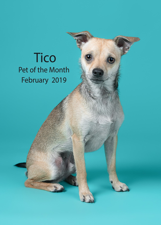 Tico feb pet of the month