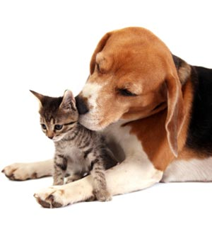 Helpful Links for your pet in Mill Creek WA