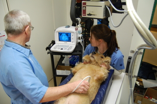 Dog Ultrasound Discovery Bay Veterinary Clinic