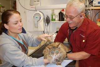Examining a cat Discovery Bay Veterinary Clinic