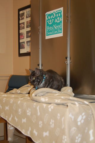 Exam room and cat Discovery Bay Veterinary Clinic