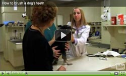 How to brush a dog's teeth video