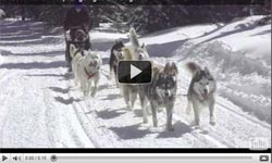 Frisco Animal Hospital dog sled team