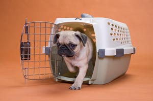 Pet travel tips from Frisco Animal Hospital