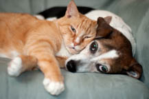 Pet Friendly Apartments in Baldwinsville