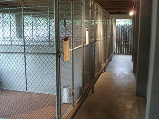 Outdoor kennels at Kentuckiana Animal Clinic in owensboro