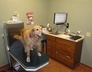 Dog on exam table at Frisco Animal Hospital