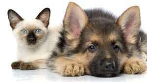 Pet care tip of the week