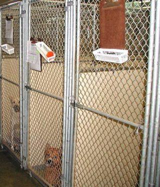 Smyrna, Georgia  Chastain Animal Clinic dog kennels