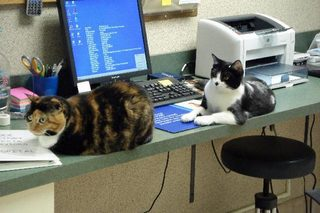 Penelope and Tripod in the Kentuckiana Animal Clinic reception area