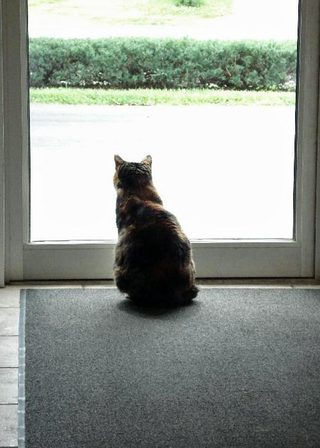 Penelope sits at the door of Kentuckiana Animal Clinic