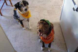 Dogs, Gracie and Belle Neely on Halloween