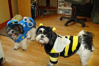 Dogs, Jack and Grace on Halloween