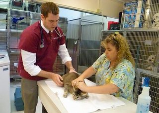 Veterinary team at Santa Clara Animal Hospital