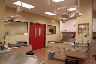 Treatment Casa Grande Animal Hospital