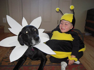 Child dressed as bee with dog flower Riverview Animal Hospital