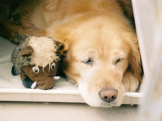Dog sleeping next to stuffed Riverview Animal Hospital