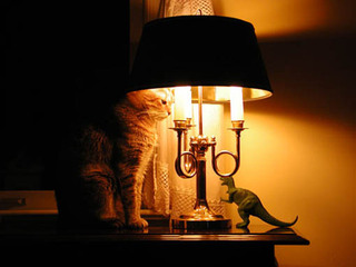 Cat under a lamp with dinosaur Riverview Animal Hospital