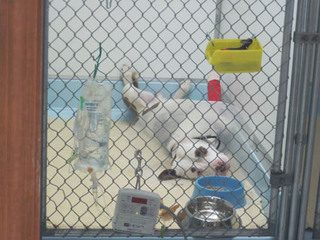 Dog sprawling out in a cage Riverview Animal Hospital