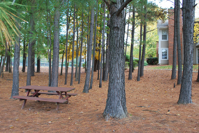 Apartments in Durham, NC picnic area
