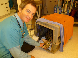 Zoo at scah 9 2011 006 Santa Clara Animal Hospital