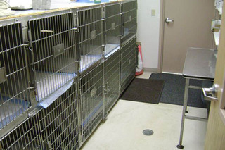 Holding cages Camboro Veterinary Hospital