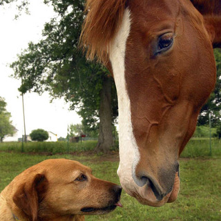 Horse and dog Brady Veterinary Hospital
