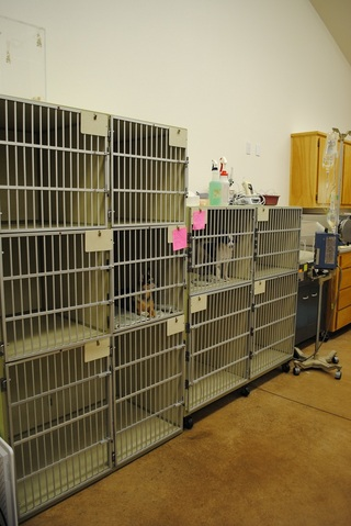 4 Westside Pet Hospital and Boarding