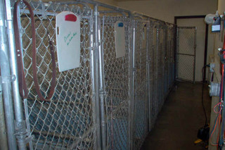 Kennels at in Animal Clinic of Rapid City