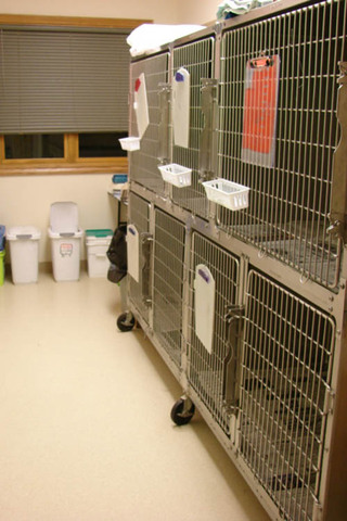 Veterinarian in kennels Animal Clinic of Rapid City