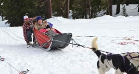 Somerset assisted living dog sled
